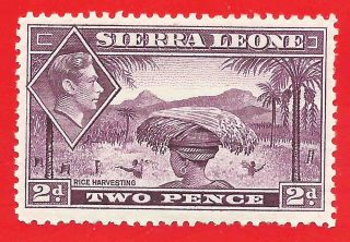 Mlh 2d Mauve Stamp 1938 Sierra Leone Rice Harvesting King George Vi Damage Perfs photo