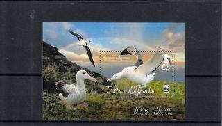 Tristan Da Cunha 2013 Tristan Albatross 1v Sheet S/s Birds Nature Wwf photo