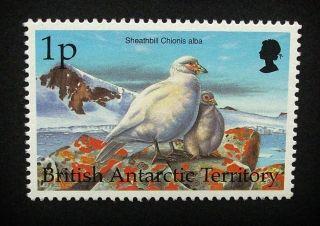 British Antarctic Territory Qeii 1p Bird Stamp C1993 Snowy Sheathbill,  Um,  A915 photo