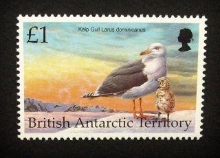 British Antarctic Territory Qeii £1 Bird Stamp C1993 Kelp Gull,  Um,  A919 photo