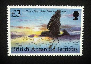 British Antarctic Territory Qeii £3 Bird Stamp C1993 Wilson ' S Petrel,  Um,  A920 photo