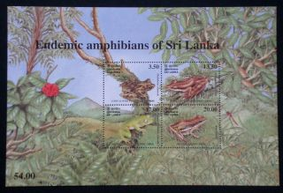 Sri Lanka 2001 Reptiles Amphibians Frogs Herpetology Dragonfly photo
