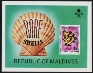 Maldives 793 Rare Shells photo