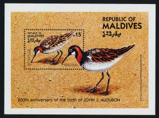 Maldives 1083 Birds,  Art,  Audubon photo