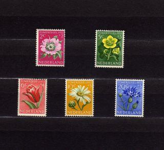 Netherlands B238 - 42 Flowers: Rose,  Marigold,  Tulip,  Daisy & Cornflower photo