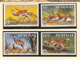 (72282) Senegal - Dama Gazelle - U/m 1986 photo