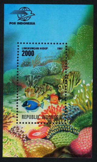 Indonesia 1714 Fish,  Coral,  Marine Life photo
