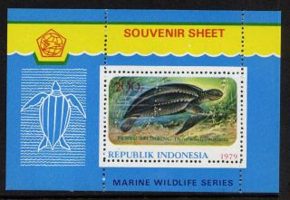 Indonesia 1066a Turtle photo