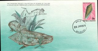 (17406) Glory Of The Sea Cone - Cousteau Cover - Maldives 1979 photo