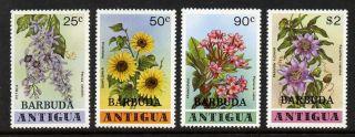 Barbuda 360 - 3 - Flowers photo