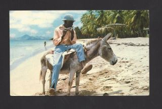 Pretty Picture Postcard From Saint Christopher - - 1981 - - Donkey Flutesociety photo