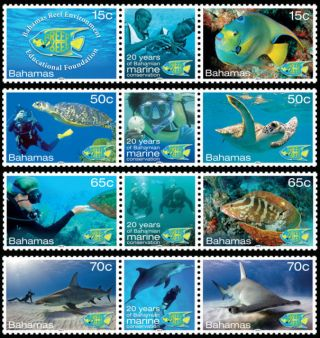 Bahamas Marine Conservation Turtle/fish/shark/dolphin photo