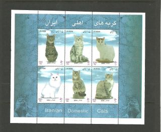 Iran 2004 Iranian Cats photo
