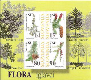 Slovenia 1998 Conifer Trees S/s (sc 327) photo