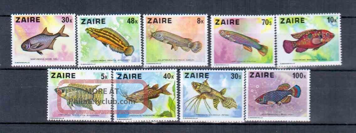 Zaire Fish Animal Kingdom photo
