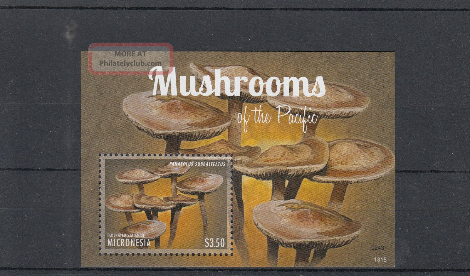 Micronesia 2013 Mushrooms Of Pacific I 1v S/s Nature Panaeolus Topical Stamps photo