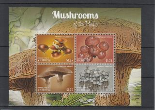 Micronesia 2013 Mushrooms Of Pacific Ii 4v M/s Nature Gymnopilus Psilocybe photo