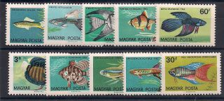 Hungary - 1962 Fishes Mlh - Vf 1495 - 04 photo