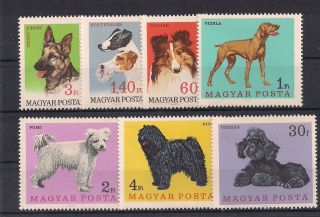 Hungary - 1967 Dogs - Vf 1903 - 9 photo