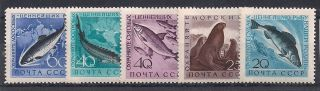 Russia - 1959 Fishes Mlh - Vf 2184 - 6 photo