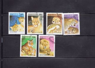 Benin 1995 Wild Cats Scott 816 - 821 Cancelled photo