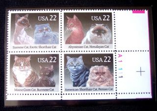 Us Plate Block Of American Shorthair And Persian Cats 2372 - 2375 photo