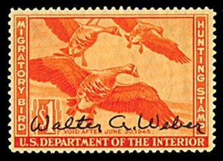 Rw11 1944 Federal Duck Stamp Signed By Walter A.  Weber Rare photo