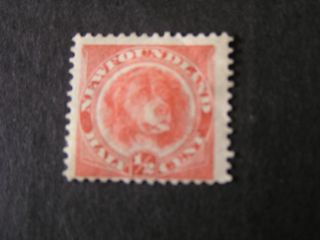 Newfoundland,  Scott 57,  1/2p.  Value Orange Red Newfoundland Dog Issue Mh photo