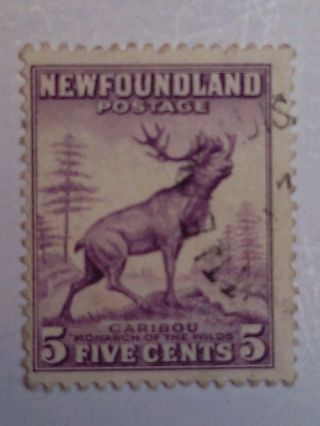 Newfoundland - Sc257 - 1941 - 5 Cent Caribou - Violet/black - photo