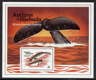 Antigua 707 Unicorn Whale,  Marine Life photo