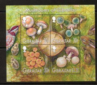 Gibraltar Sgms1061 2003 Mushrooms photo