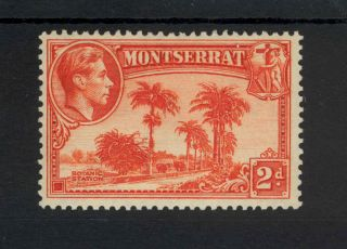 Montserrat Kgvi 1938 2d Orange Sg104 (perf 13) Mm photo