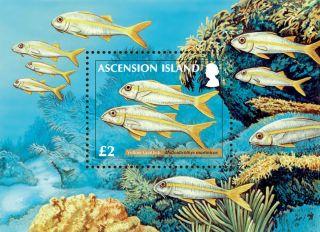 Ascension 2012 Reef Fish Pt Ii 1v Ms photo