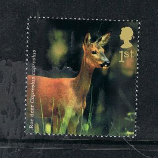 Roe Deer Illustrated On 2004 British Stamp - Nh photo