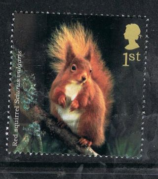 Red Squirrel Illustrated On 2004 British Stamp - Nh photo