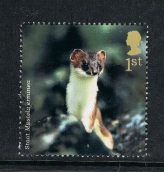 English Stoat Illustrated On 2004 British Stamp - Nh photo