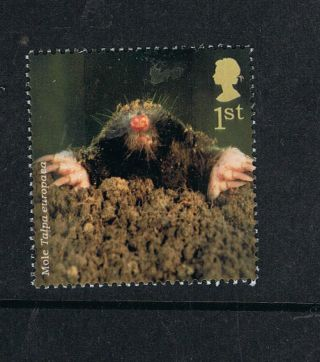 English Mole Illustrated On 2004 British Stamp - Nh photo