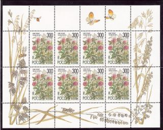 Russia 1995 Flowers Miniature Sheet (sc 6261a) photo