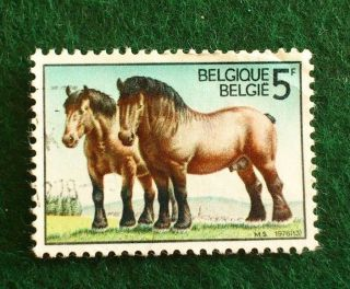 Belgium.  5 F.  1976.  50th Anniv.  Of Ardennes Draught Horses Society. photo