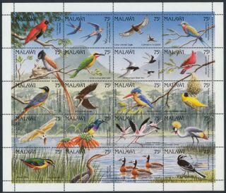 Malawi 598 Birds,  Flowers photo