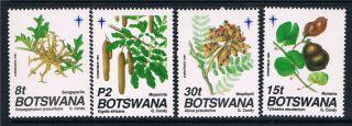 Botswana 1991 Christmas Seed Pods Sg 721/4 photo
