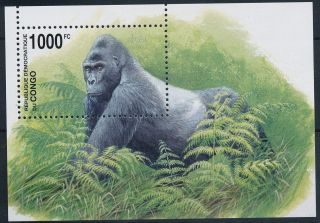 Congo Gorilla - Monkey - Sheet - Gorille - Singes - Affen - Apen photo