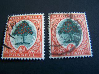 South Africa.  25a,  B.  Orange Tree. photo