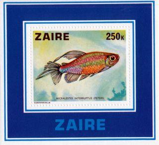 Congo (zaire) - 1978 - Fish Micralestes Interruptus - photo