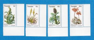 Transkei Scott 24 - 27 1977 Medicinal Plants photo