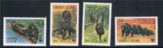 Sierra Leone 1983 Endangered Species Sg 745/8 photo
