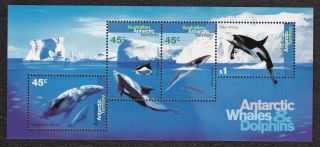 Australia Antarctica - L97a - S.  Sheet - Whales - 1995 - - B3878 photo