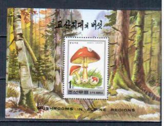 N.  Koreea Block Mushrooms photo