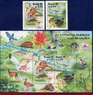2554 - 56 Brazil 1995 Lubrapex Phil.  Exhibition,  Birds,  Fauna,  Mi 2664 - 65 & B99, photo