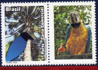 11 - 46 - 7 Brazil 2011 - Blue Jackdaw,  Birds,  Fauna,  Parrot,  Personalized photo